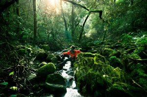 EcoPsychology Initiative Ecotherapy Training